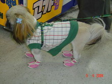 Why don't you just buy a doll if you want to play dress-ups? Korean Barbie Doll Dog.