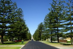 The Norfolk Pine Lined streets ofCottesloe