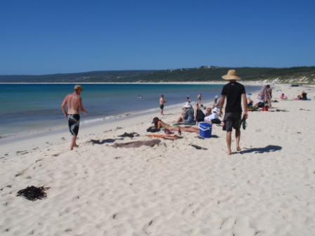 chilling-hamelin-bay-just-another-beautiful-wa-beach