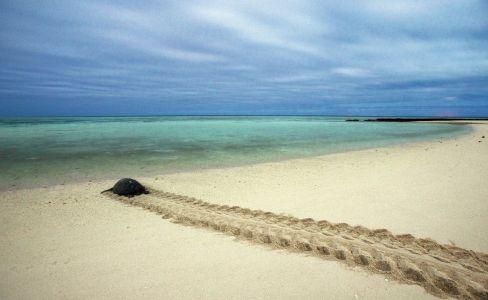 heron-island