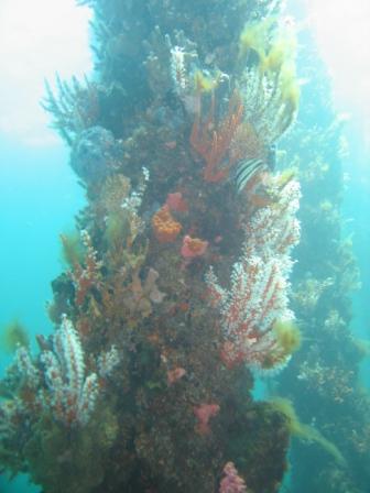 coral-encrusted-pillar